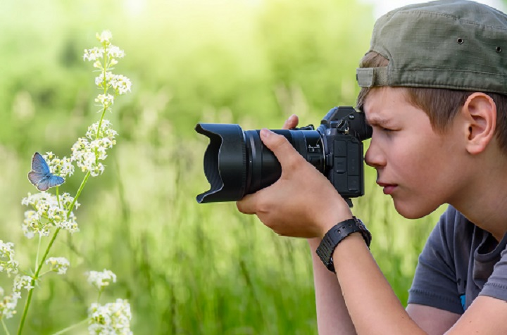 Boy, twelve years old, shooting blue butterfly on the wild flower on nature in summer day